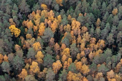 Saugomose ir kitose jautriose teritorijose miško kirtimai bus ribojami, mažės plynųjų kirtimų