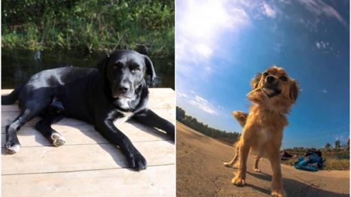 Labanoro girioje aidėjo šūviai: nušauti du šunys, kaltininkas nenustatytas