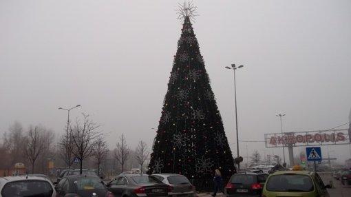 Ankstyva kalėdinė eglė