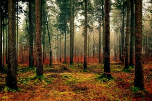 Norima vėl svarstyti draudimą įsigyti daugiau nei 1,5 tūkst. ha miško