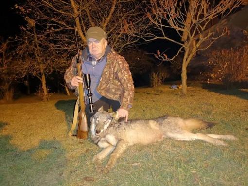 """""""Kielių"""" būrelio medžiotojas patiesė jau trečią vilką"""