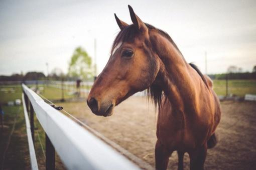 Kiek arklio galių turi vienas arklys? Tik nemanykite, kad vieną