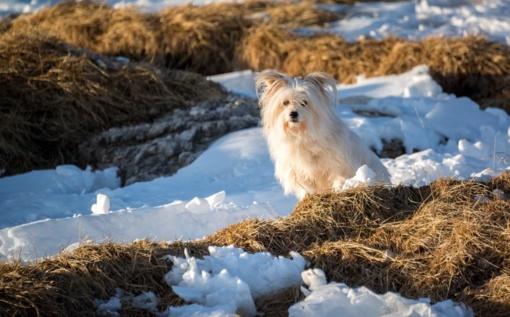 Orai vis labiau primins žiemą: pasirodys snaigės