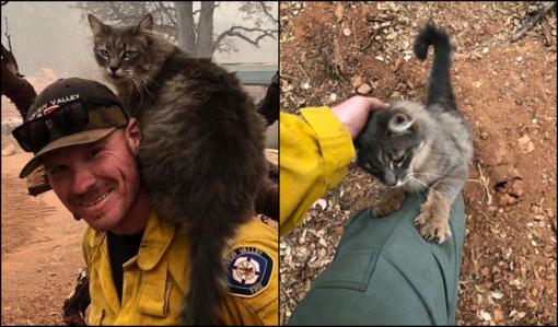 Miela akimirka: iš Kalifornijos gaisrų išgelbėta katė dėkojo ugniagesiui (vaizdo įrašas)