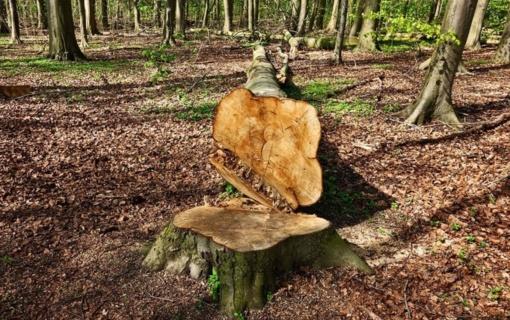 Bus ribojamas galimo įsigyti miško plotas