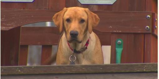 Čia tai bent radinys: kieme žaidęs šuo surado šį tą netikėto (vaizdo įrašas)