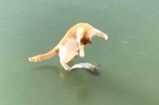 Griūk iš juoko: katės reakcija išvydus ežere užšalusias žuvis (vaizdo įrašas)