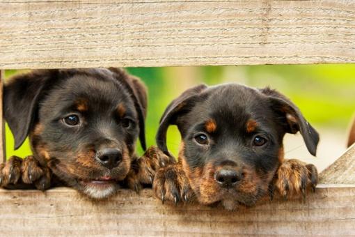 Prienuose iš upės ištraukti du šuniukai