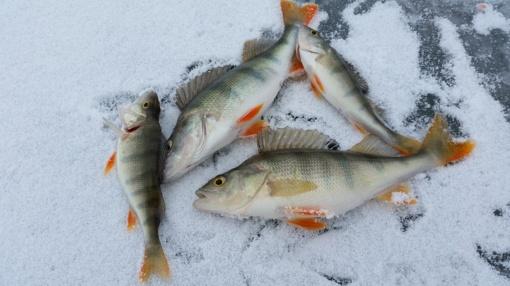Perspėja poledinės žūklės mėgėjus: ledas ant ežerų dar plonas