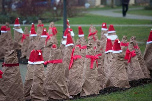 Chaimo Frenkelio vilos parke tūkstantis rožių virsta kalėdinėmis dekoracijomis
