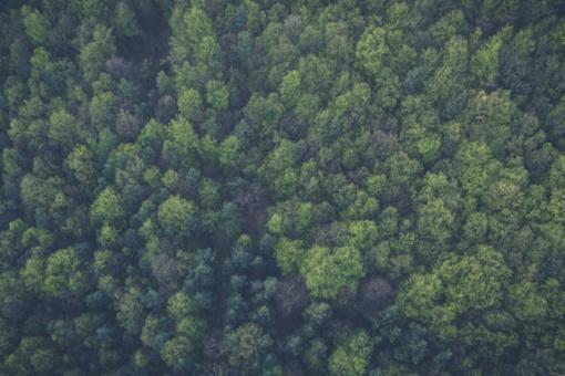 Rengiami miškotvarkos projektai Biržų, Kupiškio, Pakruojo ir Panevėžio valstybiniams miškams