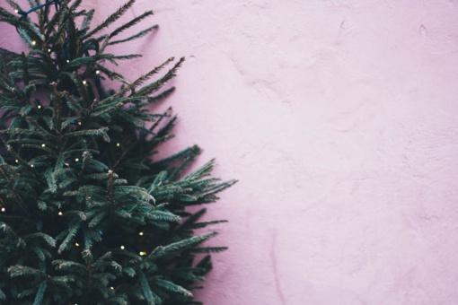 Kauno rajone iš kiemo pavogta kalėdinė eglutė