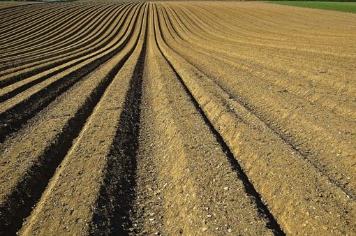 Parlamentarų dilema dėl žemės ūkio: tirti ar netirti?