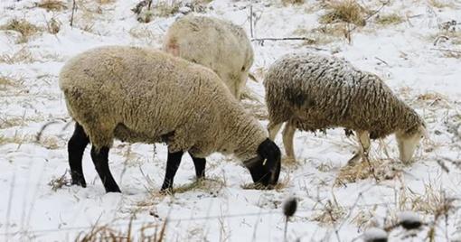 Socialinė parama žmonėms, o ne gyvuliams