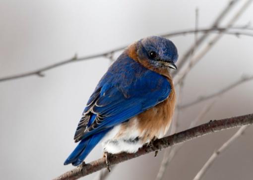 NMA kviečia teikti paraiškas retų paukščių populiacijos išsaugojimui