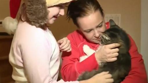Įlipęs į pakuojamą siuntinį, katinas atsidūrė už 1200 km