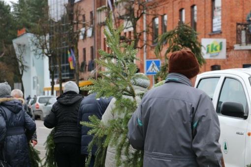 Rytoj Valstybinių miškų urėdijos miškininkai visoje Lietuvoje dovanos kalėdines eglių šakas
