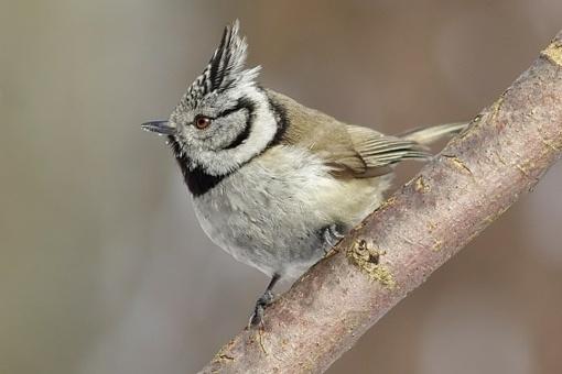 Kviečia dalyvauti kalėdiniame paukščių stebėjimo maratone