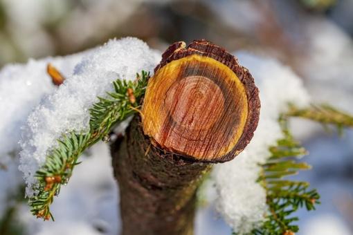 Valstybinių miškų urėdijai pirmieji veiklos metai buvo sėkmingi