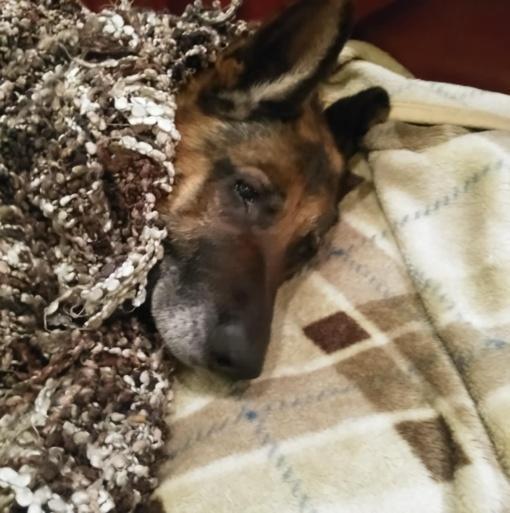 Azaras - šuo, kuris linki nenuleisti letenų!
