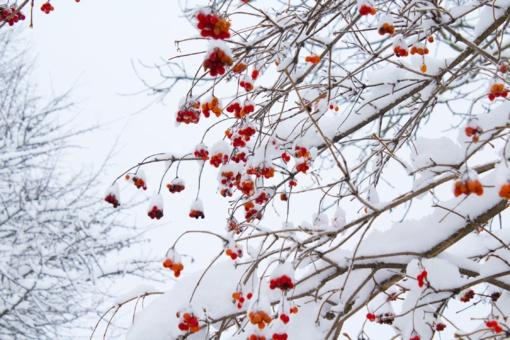 Žiema dar parodys ką moka: į Europą ir JAV plūstels arktinis oras