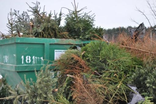 """Žalioji akcija ,,Kalėdų eglutė – namų šilumai"""""""