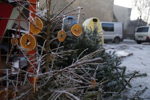 Ką daryti nupuošus Kalėdų eglutes?