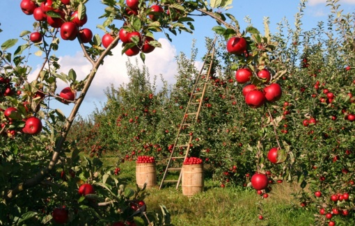 Pasiūlytos priemonės padidinti ekologiškai ūkininkaujančiųjų skaičių