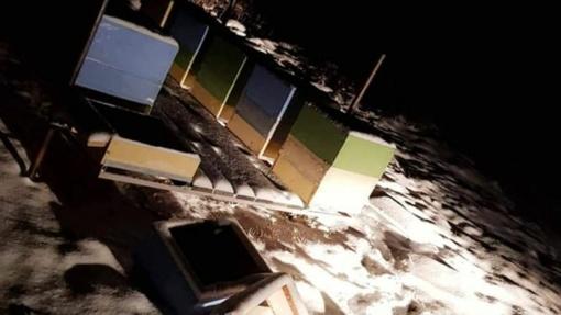 Kėdainių rajone išniekintas bičių ūkis: baiminasi, kad po vandalų išpuolio laukia pražūtis