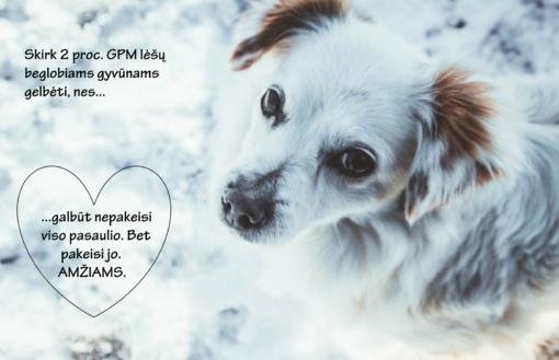 Kviečia 2 proc. GPM lėšų skirti beglobiams gyvūnams gelbėti