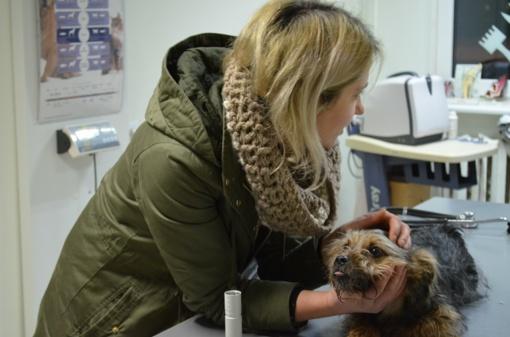 Prašo pagalbos: Kėdainiuose žiauriai sumuštas šuo