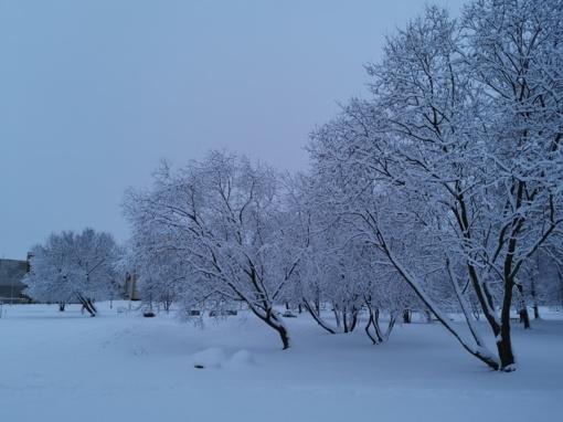 Šiandienos žiemos grožis