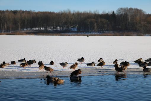 Orų prognozė: po pavasariško savaitgalio – žiemos revanšas