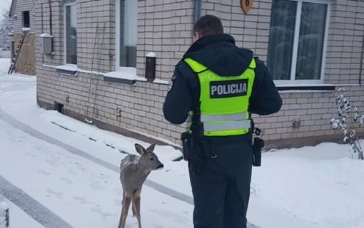 Šią savaitę pareigūnai padėjo ne tik žmonėms – gelbėtas šuo ir stirnos jauniklis