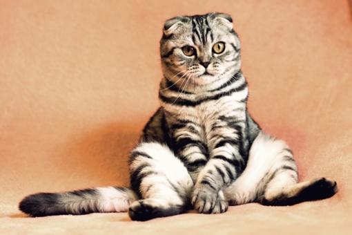 Katino kastracija: kuo ypatinga kastruoto katino priežiūra?