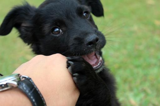 10 dalykų, kuriuos turėtumėte žinoti, prieš įsigydami šunį