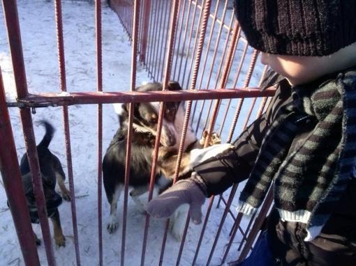 Išvyka į gyvūnų globos namus
