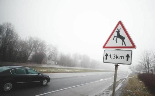 Keliuose – laukinių gyvūnų testas
