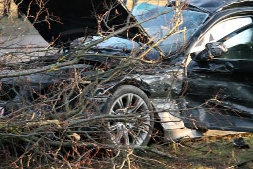 Šakių rajone nuvirtęs medis apgadino automobilį