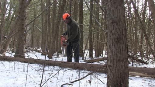 Miškininkystės darbų rangos pirkimų sąlygos suvienodintos visuose šalies regionuose