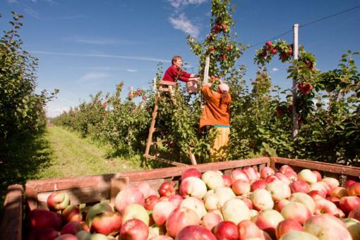 Smulkiųjų ūkių verslo planams įgyvendinti – 10 mln. eurų