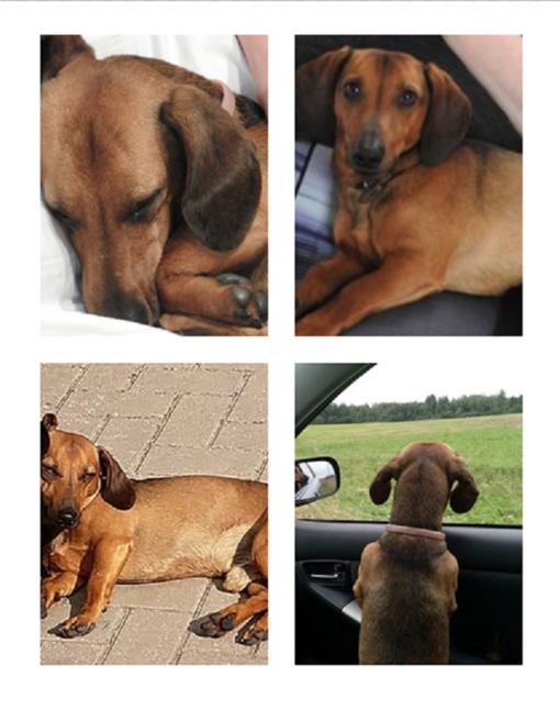 Gyventojai prašo pagalbos - dingo mylimas šuo