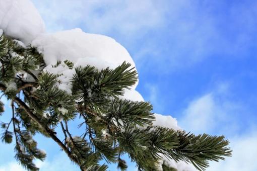 Orai: žiema taip lengvai nepasiduos – sulauksime atšalimo