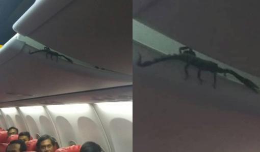 Lėktuvo keleivius ištiko šokas: virš galvų pasirodė gigantiškas gyvis