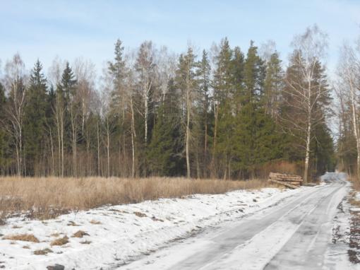 Miškas – ne tik kubiniai metrai, rąstai, malkos, bet ir atgaiva