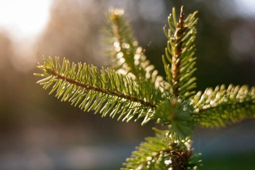 Orai: po švelnios žiemos pabaigos plūstels šaltesnės permainos