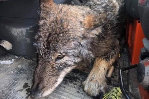 Estai iš ledinio vandens išgelbėjo gyvūną: manė, kad šuo, bet klydo
