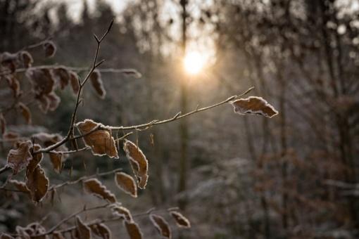 Orų prognozė: pavasario pradžią sujauks žiema