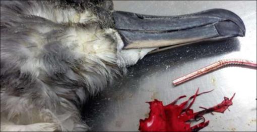 Jūsų vaikų mėgstamiausi žaislai žudo jūrinius paukščius