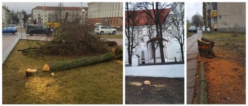 Miestiečiai susibūrė gelbėti medžių